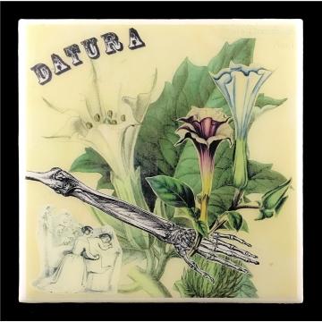 Datura (Datura Stramonium)
