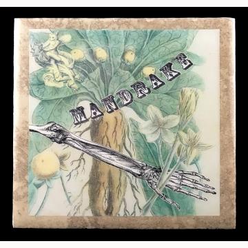 Mandrake (Mandragora officinarum)