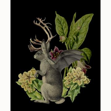 5x7 Jackalope Vespertilio Creepture Print  (Light)